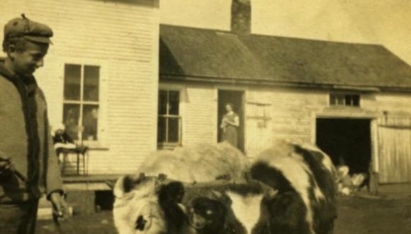 Souvenirs des quatre coins du Québec - patrimoine agricole